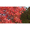 Autumn 006 (stock movie HD material)