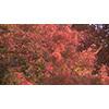 Autumn 001 (stock movie HD material)
